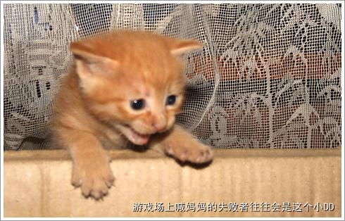 壁纸 动物 狗 狗狗 猫 猫咪 小猫 桌面 490_314