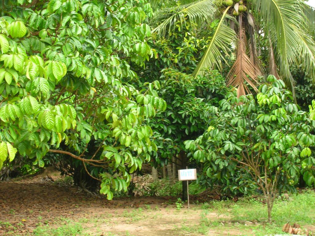 参观热带水果园,享受热带水果大餐\u2015\u2015\u2015