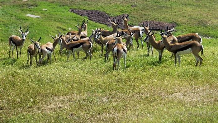 非洲野生动物的仙境