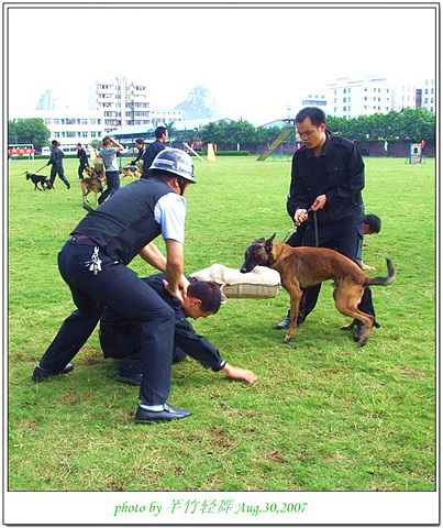 柳州市2007年警犬技术大比武