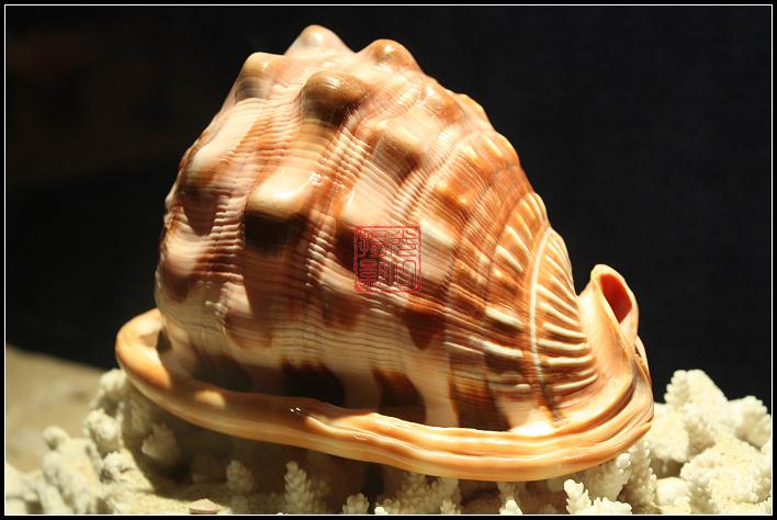 红豆社区 - 靓靓的贝壳(39PP)