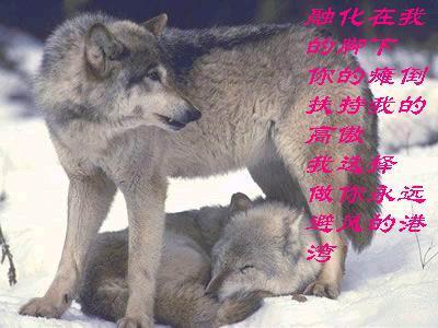 狼头像带文字