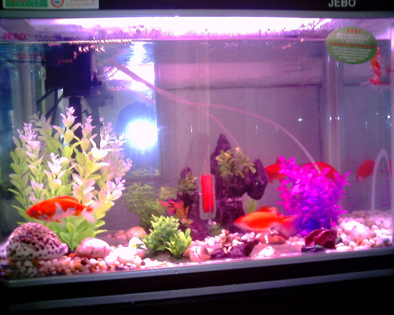 壁纸 动物 罐 鱼 鱼类