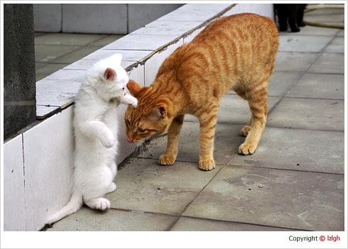 春日阳光下的猫咪(1)