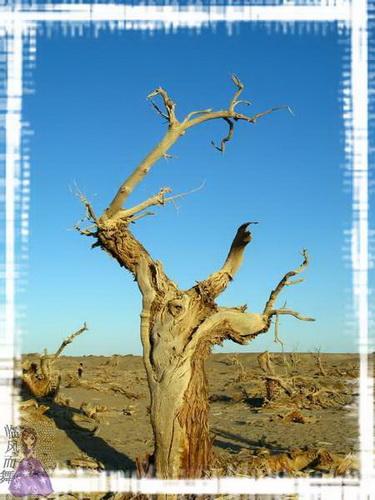 西北行6—内蒙古额济纳旗南线:红城遗址,神秘黑城,怪树林奇观