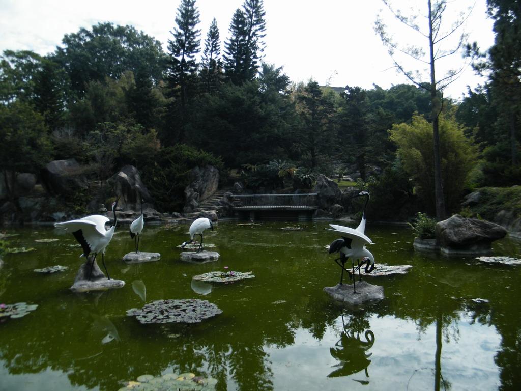 厦门园林植物园松杉园