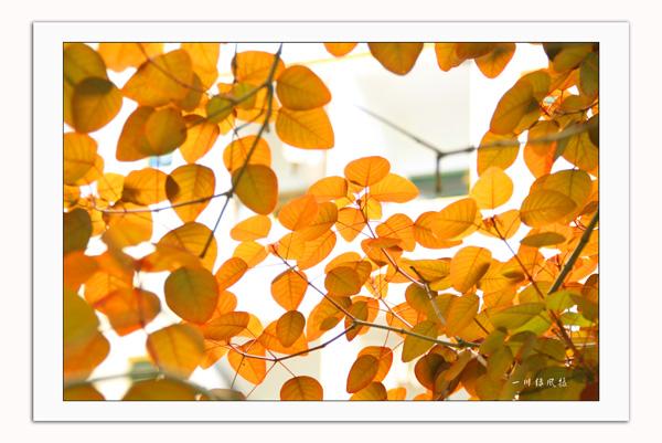 有谁知道这个叶子是哪棵树上的?叫什么名字