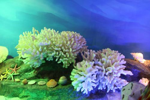 六一节,陪孩子逛南宁海底世界