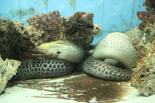 海底世界幼儿绘画海马展示