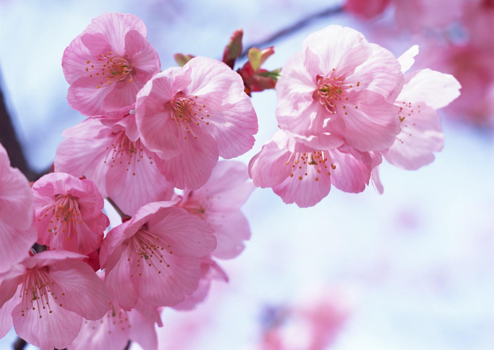 描写梅花的优美句子 形容梅花的唯美短句