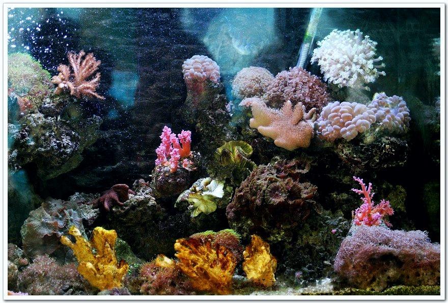 南宁海底世界--珊瑚篇