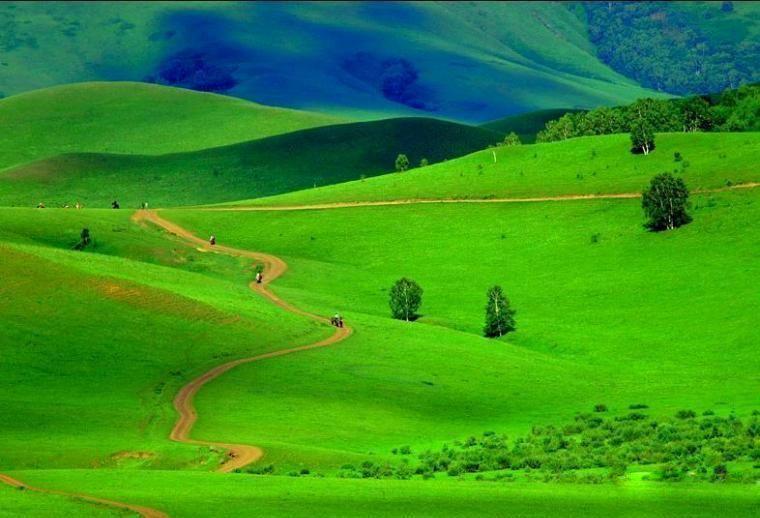养眼壁纸绿色高清风景
