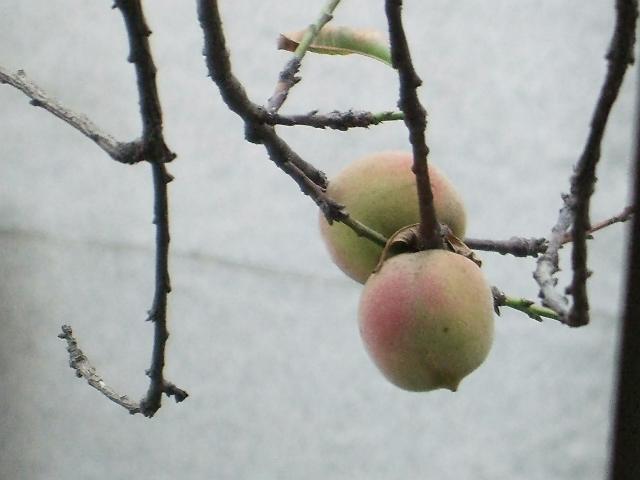 瓜果做动物造型