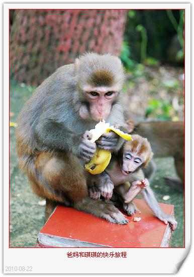 猴子最怕的动物