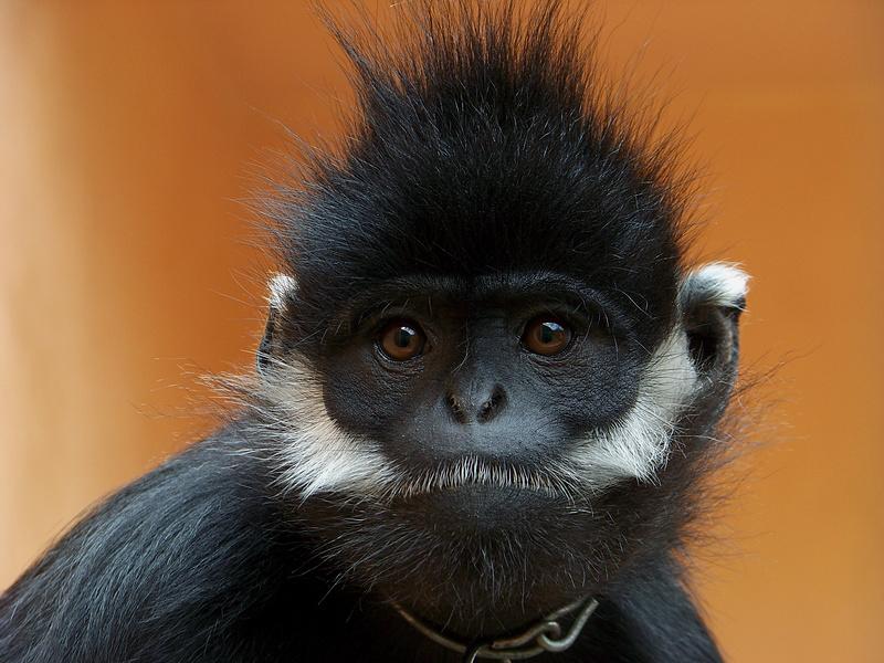 直奔云龙公园黑叶猴珍稀动物繁殖中心.